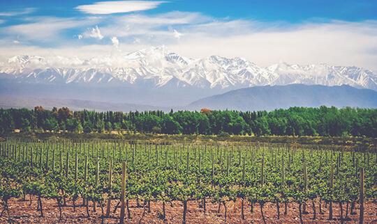 Argentina Vineyards 540x322
