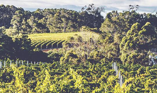 Australia Vineyards 2 540x322