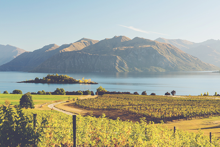 A Guide to New Zealand Wine - Vineyard 3