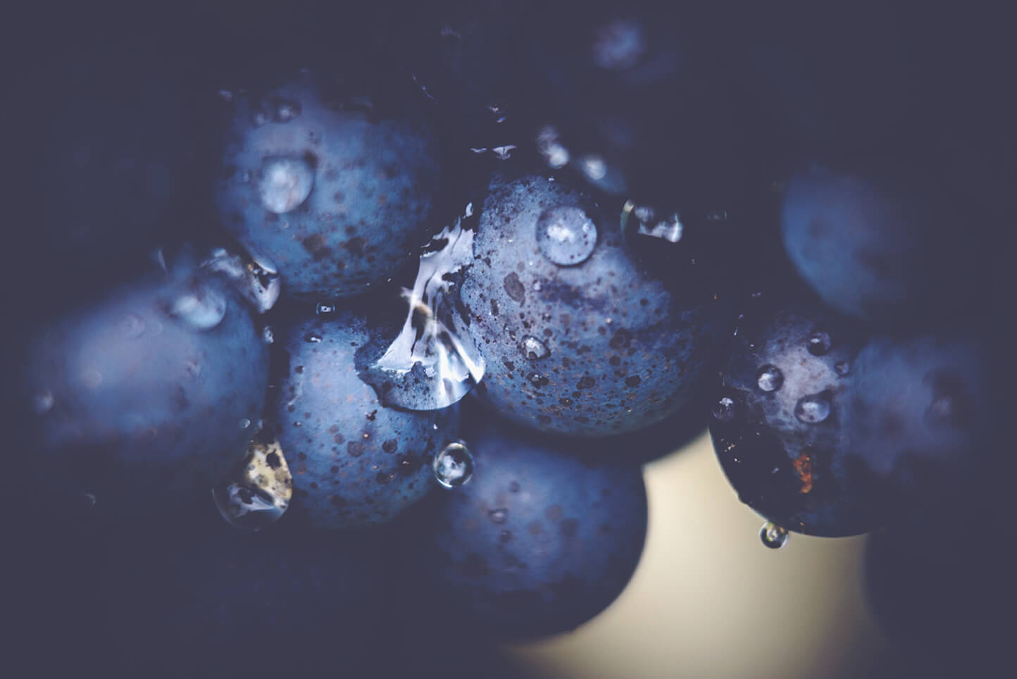 A Guide to Red Burgundy - Grapes