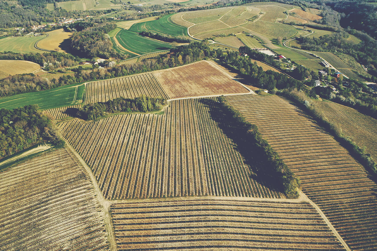 A Guide to Red Burgundy - Vineyard