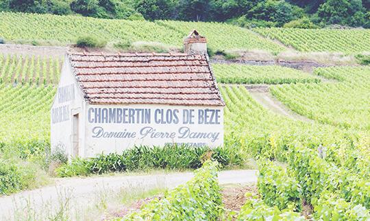 Red Burgundy Guide Vineyard 540 x 322