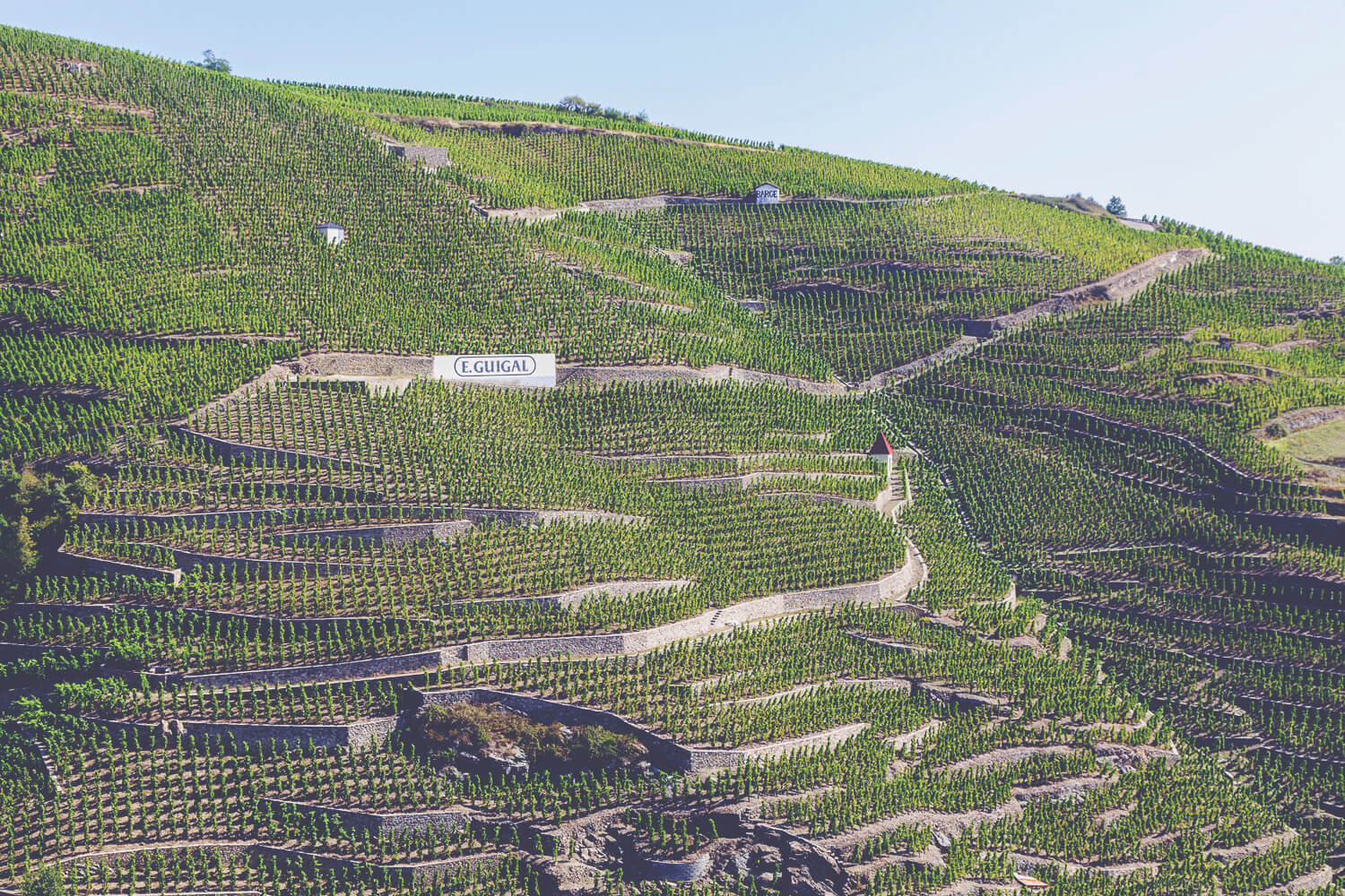 A Guide to Rhone - Guigal Vineyards