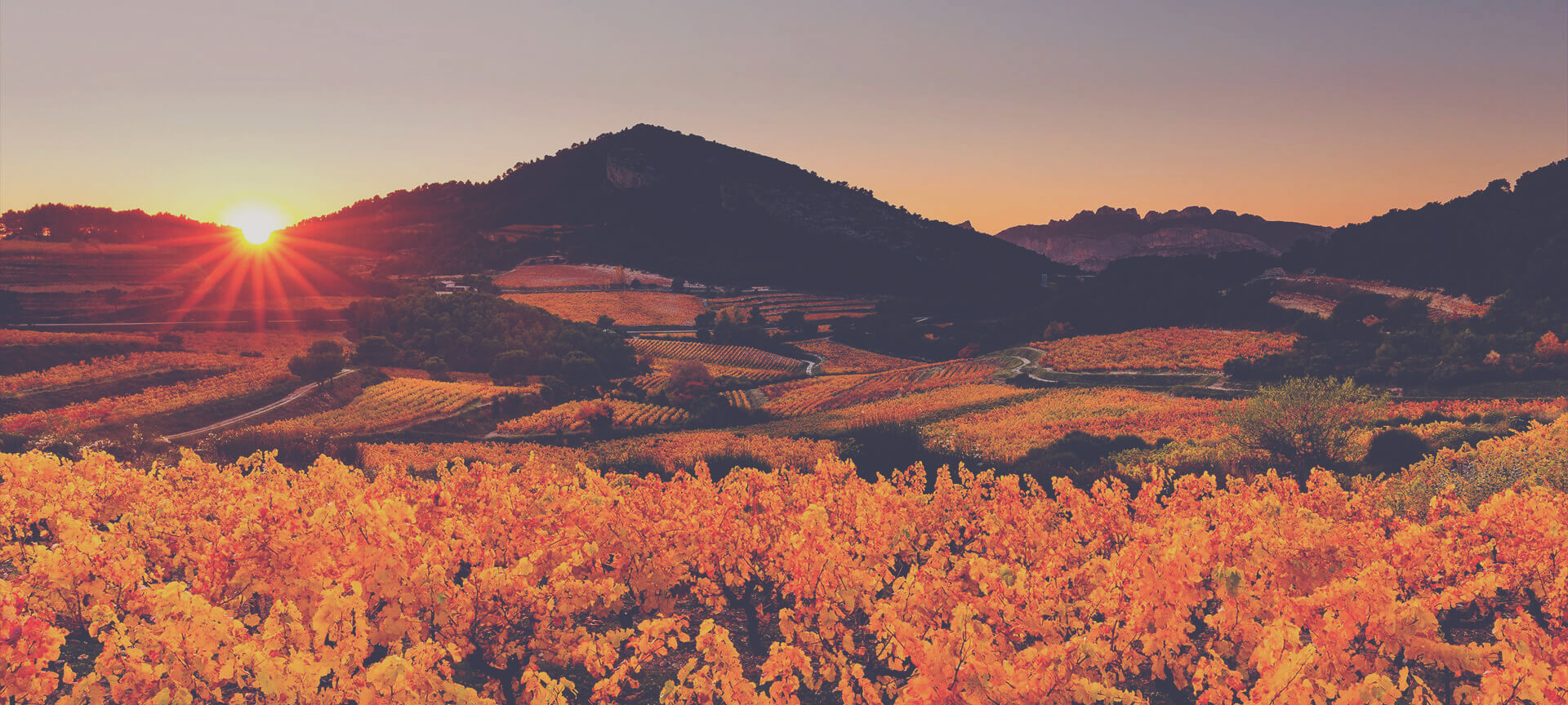A Guide to Rhone - Sunset Vineyard