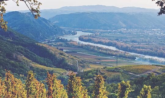 Rhone Vineyard landscape 540x322