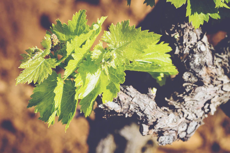 A Guide to Rhone - Vine