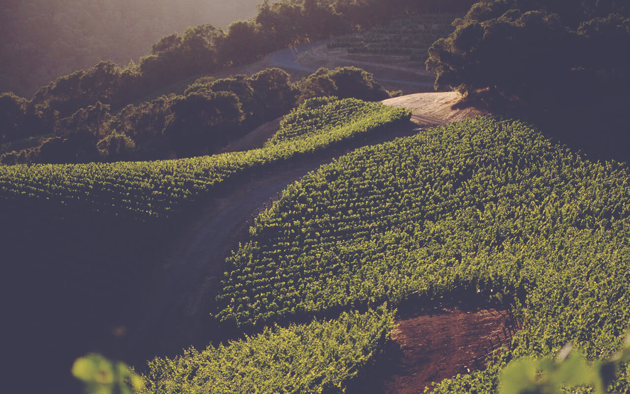 USA Vineyards 4