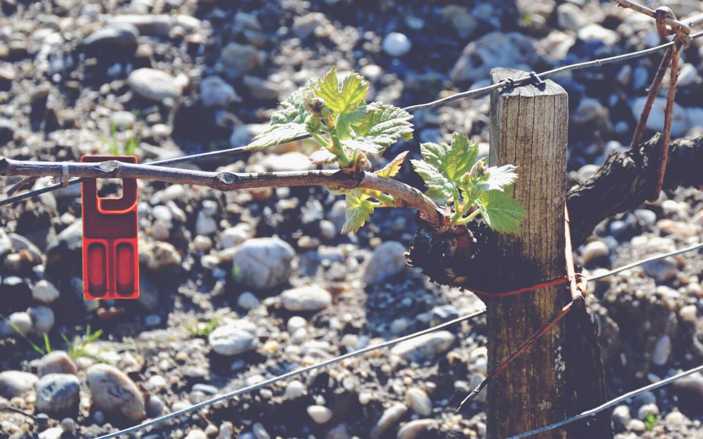 A Guide to White Bordeaux - Vine