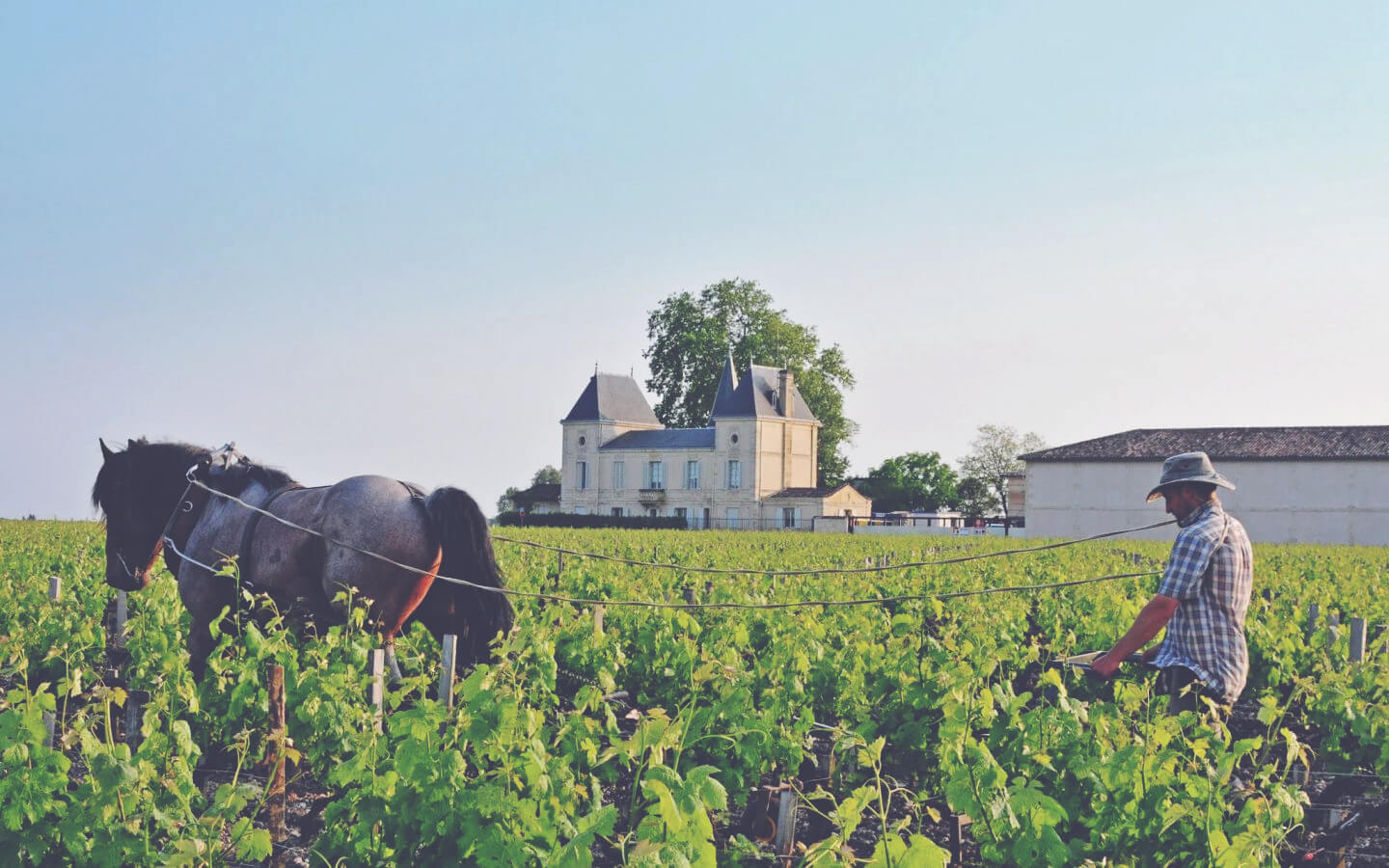 A Guide to White Bordeaux - Chateau