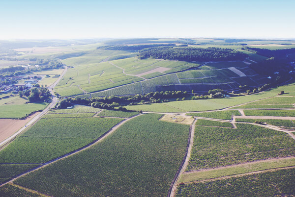 A Guide to White Burgundy - Vineyard Landscape