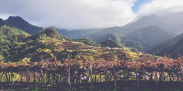 Madeira Guide Vineyard 843x474