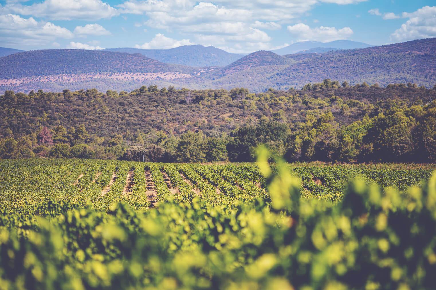 AIX Vineyards, Eric Kurver