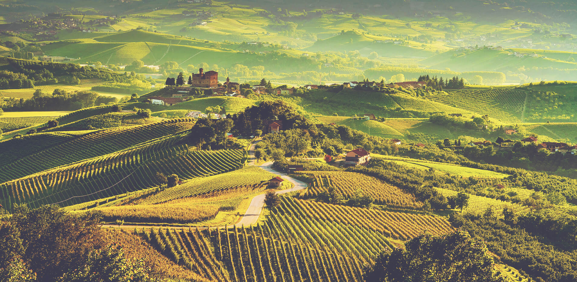 Matt Desert Island Wines - Piedmont