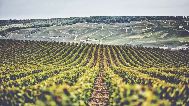 Champagne Henriot Vineyards
