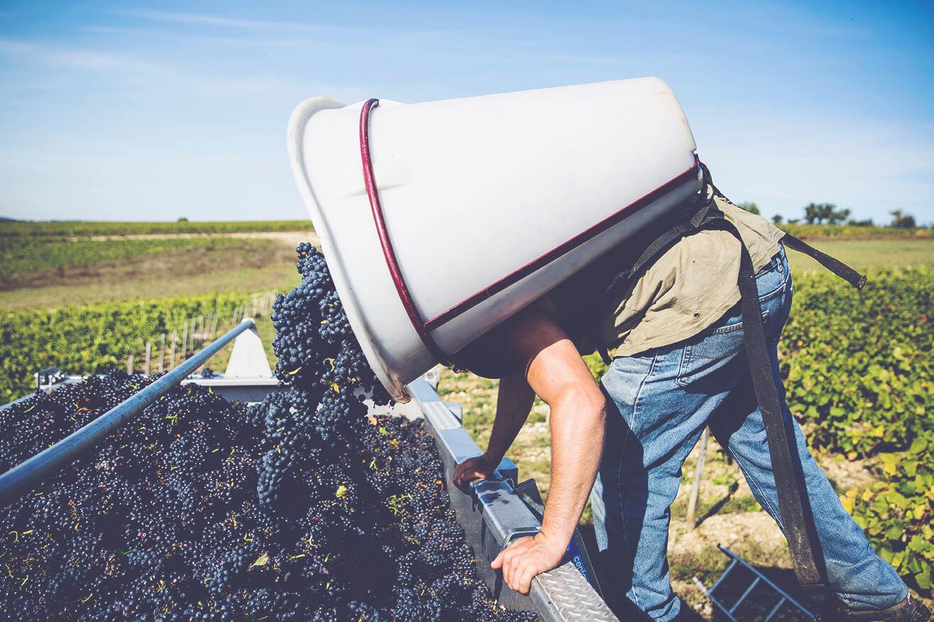 Joseph Mellot Harvest