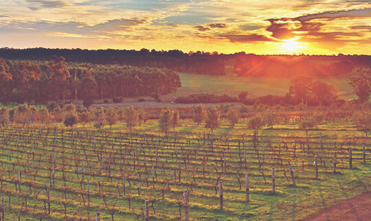 Mc H Sunrise over winery by Shane 540x322