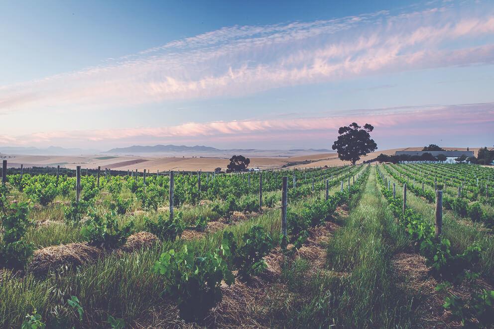 Mullineux Vineyards