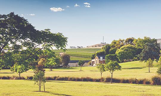 Wakefield St Andrews Vineyards View 540x322
