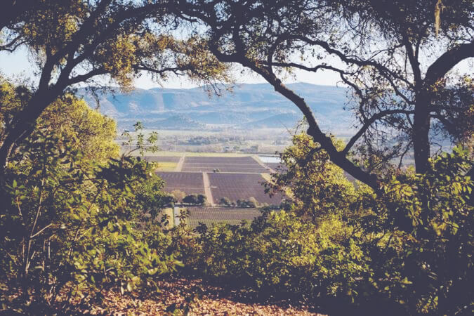 California: Cult Wines for Collectors or Central for Investment 3