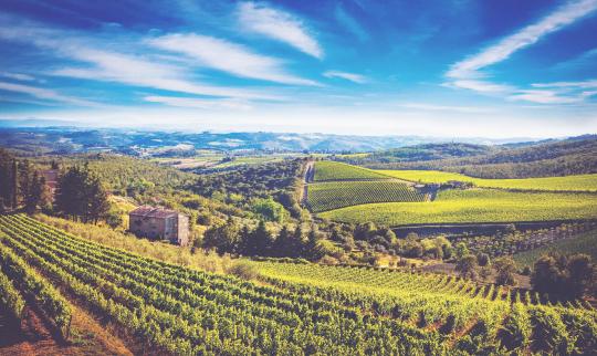 Italian wines 540x322
