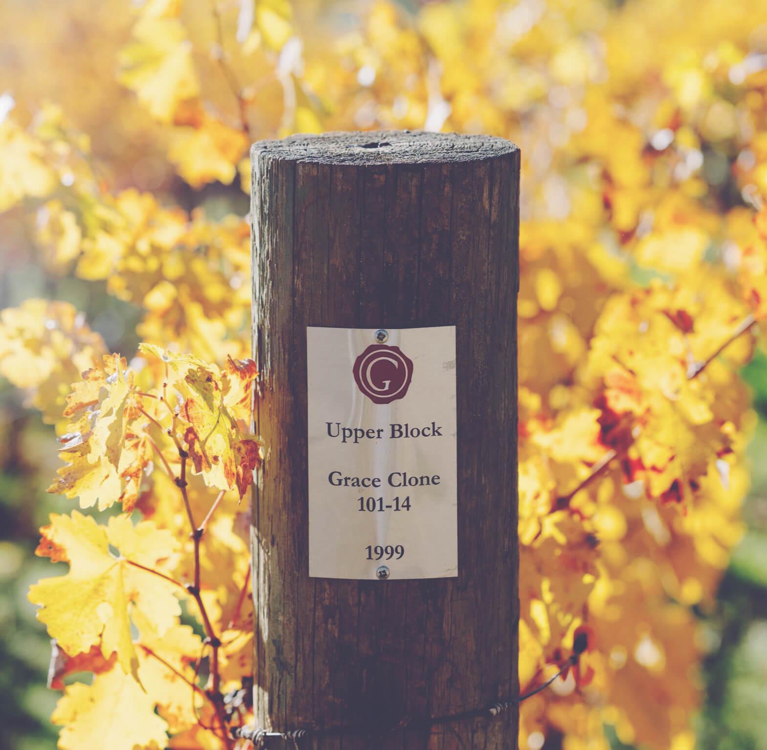 California Fine Wines Explained Grace Family Vineyards