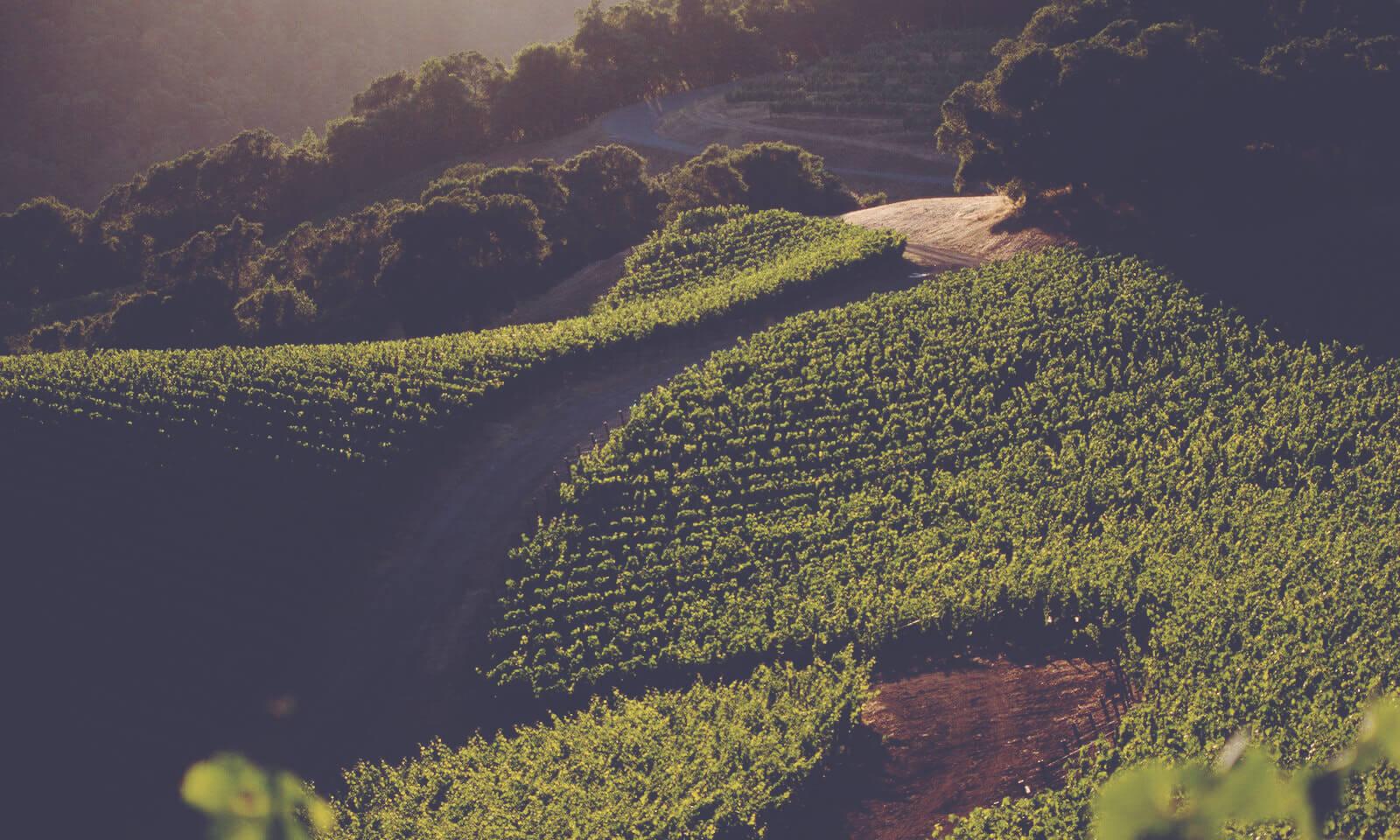 California Fine Wines Explained Harlan Estate