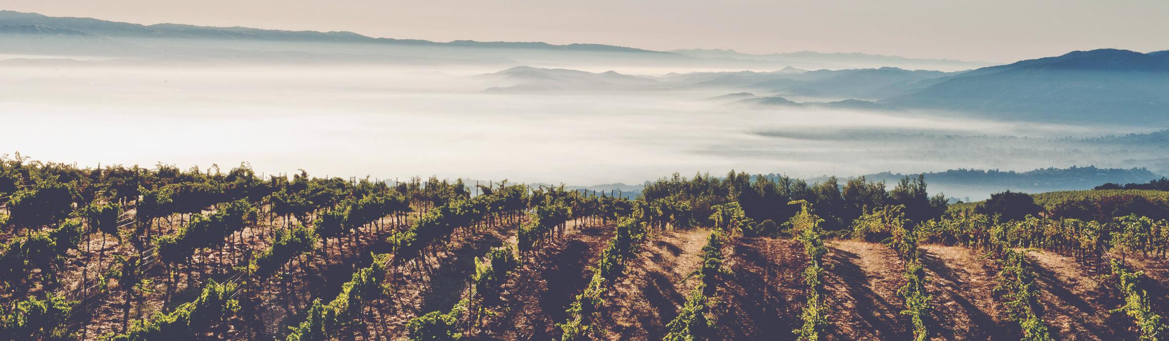 California Fine Wines Explained Ridge Monte Bello