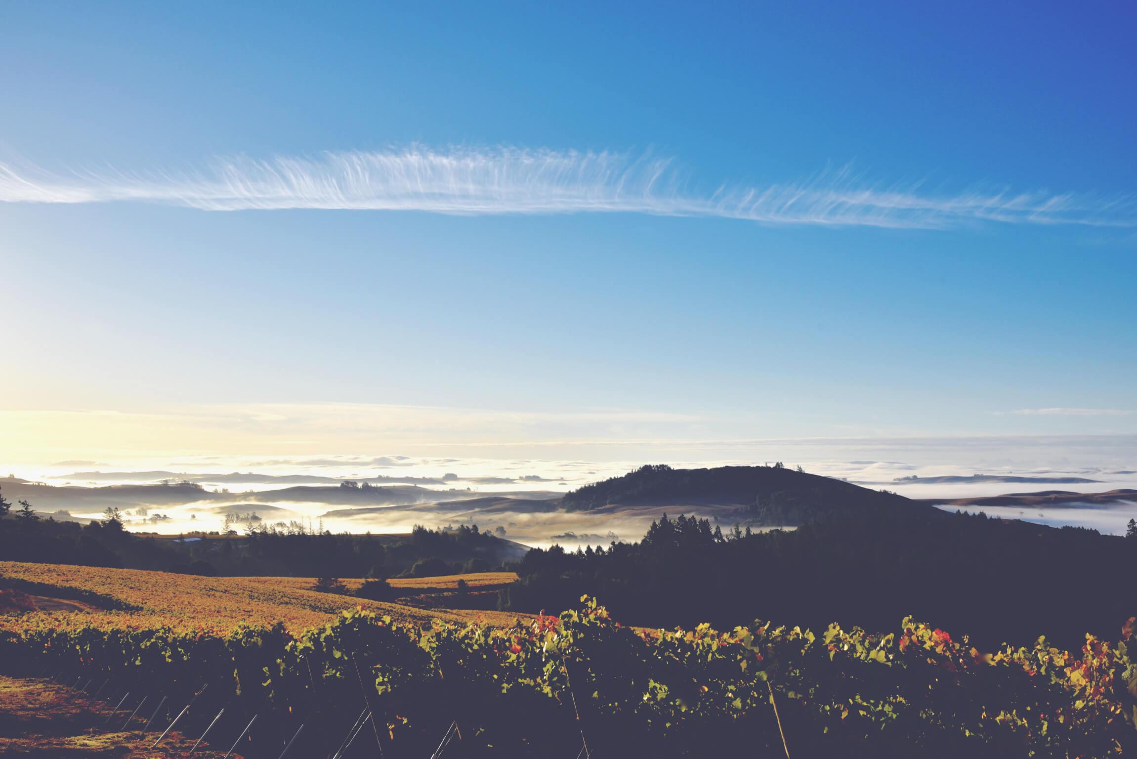 California Fine Wines Explained Occidental