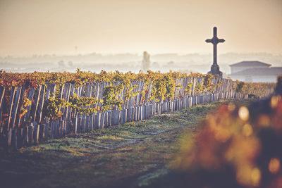 Christian Seely, CEO of AXA Millésimes group of vineyards