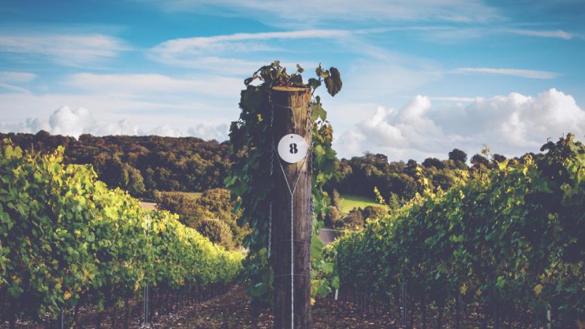 Ian Kellet, Founder and Managing Director of Hambledon Vineyards