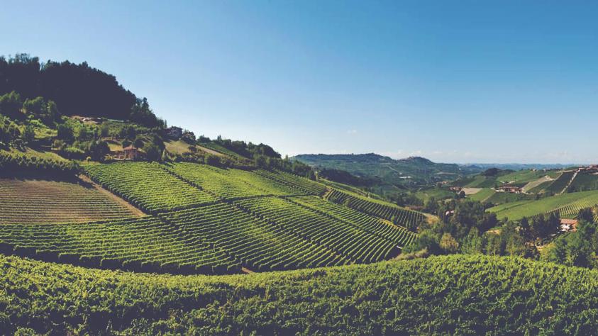 Italian Wines Image 3