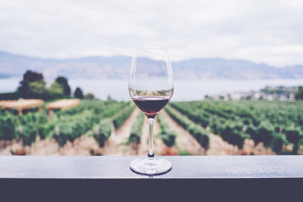 Wine Investment Initiatives Image 2